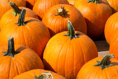 Pumkins For sale Stock Image