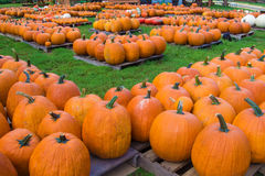 Pumkins For sale Stock Images