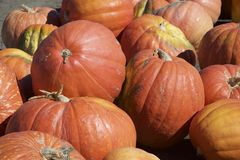 Pumkins for sales stock photos