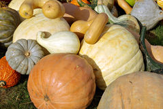 Pumkins and Squash 2 Royalty Free Stock Photography