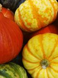 Pumkins and Squashes Stock Photography