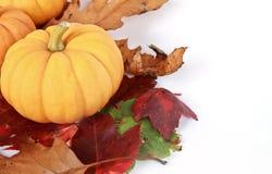 Pumkins sur des lames d'automne Image libre de droits