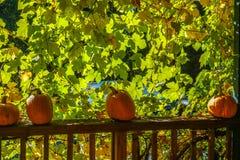 Pumkins sur la balustrade avec du raisin laisse le fond Image stock