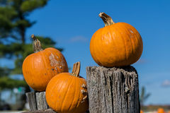 Pumkins Stock Photos