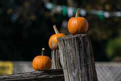 Pumkins Royalty Free Stock Photography
