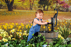 Pump among the Daffodils Stock Images