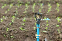 Pump head for vegetable plant Stock Images