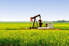 Pump Jack in Alberta Canola Field Royalty Free Stock Photos