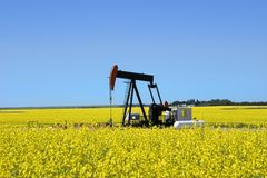 Pump jack in canola field