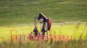 Pump Jack in Green Field. Working pump jack in green field with out of focus grass and flower in front - selective focus Royalty Free Stock Photography