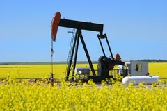 Pump Jack In Canola Field Royalty Free Stock Photos