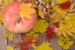 Pumpa, champinjoner, rönnbär och lönnlöv fotografering för bildbyråer