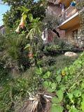 Pumpa från min organiska trädgård royaltyfri fotografi