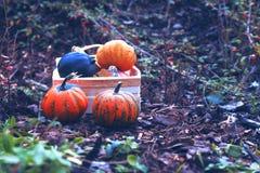 Pumpa höst, halloween, apelsin, nedgång, skörd, grönsak, pumpor, tacksägelse, lantgård, mat, pumpalapp, säsong, ferie, fotografering för bildbyråer