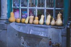 Pumpa på bondegrönsakmarknaden fotografering för bildbyråer