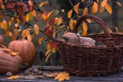Pumpa squash Lycklig tacksägelsedagbakgrund Autumn Thanksgiving Pumpkins över träbakgrund, stilleben Härlig Hol Arkivfoto