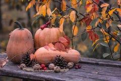 Pumpa squash Lycklig tacksägelsedagbakgrund Autumn Thanksgiving Pumpkins över träbakgrund, stilleben Härlig Hol Arkivbild