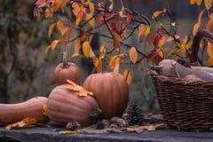 Pumpa squash Lycklig tacksägelsedagbakgrund Autumn Thanksgiving Pumpkins över träbakgrund, stilleben Härlig Hol Royaltyfri Fotografi