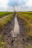 Pumpa vatten från kanalen till risfälten Royaltyfri Bild