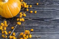 Pumpafrukt är orange, och bär är orange på en träsvart bakgrund royaltyfria foton