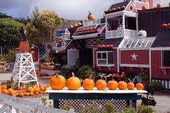 Pumpalantgård för Halloween Royaltyfria Bilder
