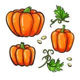 Pumpateckningsuppsättning Isolerad hand dragen grönsak, växt stock illustrationer