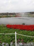 Pumpaträdgård arkivfoton