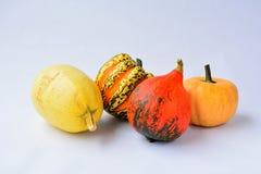 Pumpinks Imagen de archivo