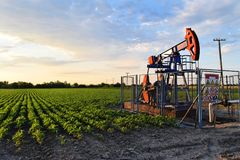 Pumpjack and agricultural field during twilight time. Dinosaur oil pump in an east European oil field situated in the middle of a farmland - dirty technology Royalty Free Stock Images