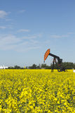 Pumpjack in Canola. A red and black pumpjack in a yellow canola field on a sunny summers day Royalty Free Stock Photo