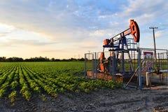 Pumpjack und landwirtschaftliches Feld während der Dämmerungszeit Lizenzfreie Stockbilder