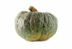 Free Pumpkin 1 Royalty Free Stock Photo - 2674155