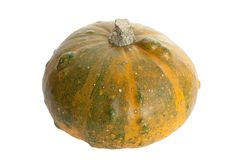 Pumpkin. The autumn crop of the pumpkin Royalty Free Stock Photography