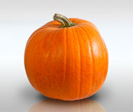 Free Pumpkin Stock Photos - 11449823