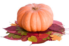 Pumpkin. On the isolated white background Stock Photography