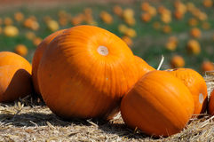 Pumpkin. The pumpkin for jime thomsun farm in Thailand Royalty Free Stock Image