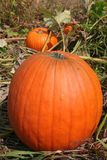 Pumpkin. A large pumpkin sitting in a pumpkin patch royalty free stock photography