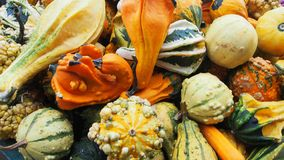 Different nice colorful pumpkins potpourri stock image