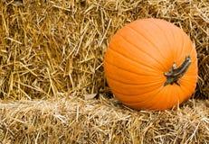 Pumpkin. A pumpkin on a stack of hay Stock Photos