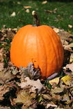 Pumpkin. Ripe pumpkin in the fall of 2006 royalty free stock images