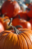 Pumpkin. Closeup of pumpkin and stem in a pile of pumpkins Royalty Free Stock Photography