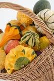 Pumpkin. Small colour pumpkin in basketfull Stock Image