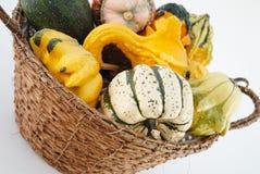 Pumpkin. Small colour pumpkin in basketfull Royalty Free Stock Image