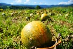 Free Pumpkin Royalty Free Stock Photos - 15737008