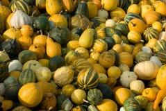 Pumpkin Royalty Free Stock Image