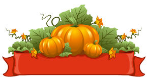 Pumpkin. Vector illustration of ripe october pumpkin Royalty Free Stock Photos