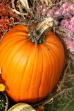 Pumpkin. A pumpkin nestled in a bed of fall flowers Royalty Free Stock Photos