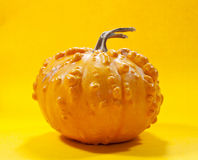Pumpkin. Yeallow pumpkin on yellow background with for hellowen or for a gift Stock Image