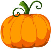 Pumpkin. Illustration of isolated cartoon pumpkin on white Stock Photos