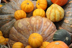 Pumpkin. Different kind of colourful pumpkin Stock Photography